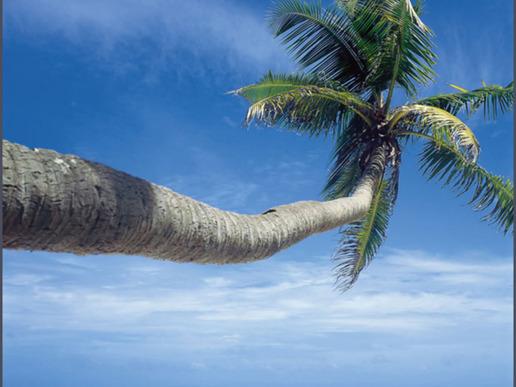 Екзотична едноседмична почивка до чудните Сейшели