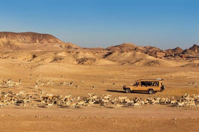 Сафари с вечеря сред дюните