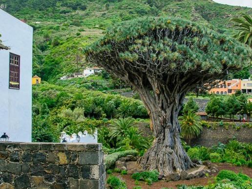 """Канделария е дом на """"Девата от Канделария"""" - покровителка на Канарските острови. Базиликата прави впечатление и с архитектурата си."""